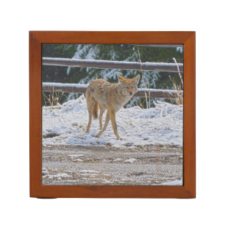 Hunting Female Coyote and Snow Wildlife Photo 2 Pencil Holder