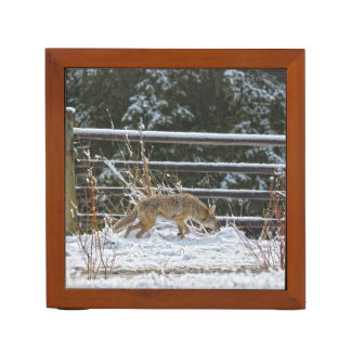 Hunting Female Coyote and Snow Wildlife Photo Desk Organizer
