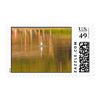 HUNTING FOR FOOD POSTAGE
