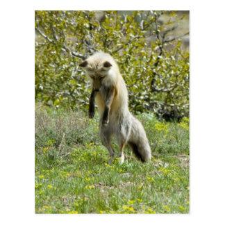 Hunting Fox Postcard
