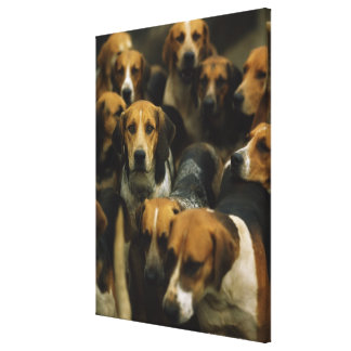Hunting foxhounds, Galway Blazers, Ireland Canvas Print