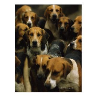 Hunting foxhounds, Galway Blazers, Ireland Postcard