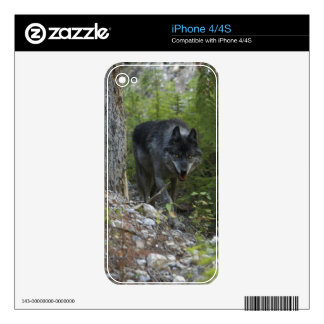 Hunting Grey Wolf & Forest Wild Animal iPhone Skin Skins For The iPhone 4