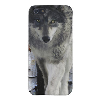 Hunting Grey Wolf Wildlife-supporter iPhone Case iPhone 5 Case