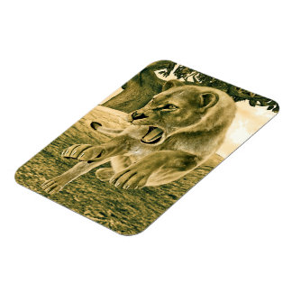 Hunting Lioness Rectangular Photo Magnet