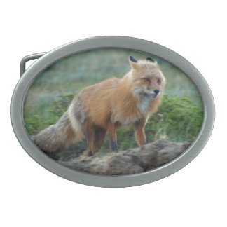 Hunting Red Fox Wildlife Photo 2 Belt Buckle