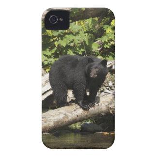 Hunting Wild Black Bear Wildlife Photo iPhone 4 Case-Mate Cases