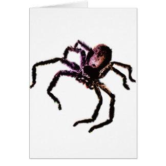 Huntsman Spider Cards