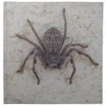 Huntsman_Spider, Servilleta De Papel