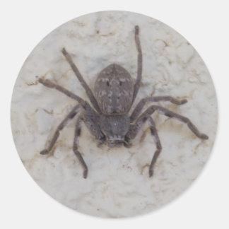 Huntsman_Spider,_Very_Cool_Sticker. Classic Round Sticker