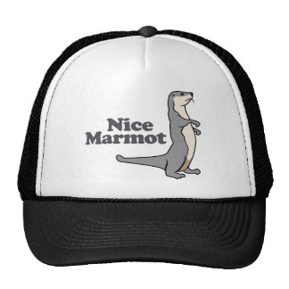 Hurón agradable de la marmota gorra