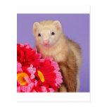 Hurón de la flor postales