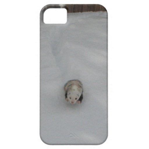 Hurón de la nieve iPhone 5 carcasas