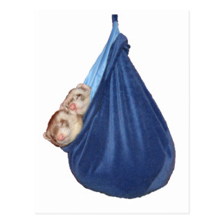 Hurónes en una postal del saco de dormir