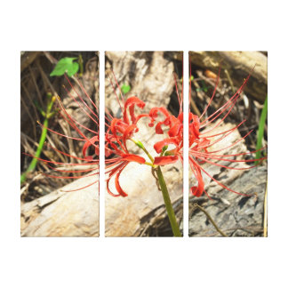 Hurricane Lily ( Lycoris radiata) Canvas Print
