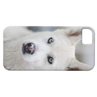 Huskey iPhone 5 Fundas