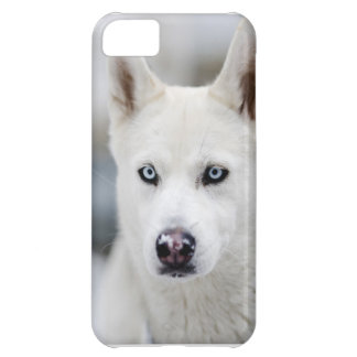 Huskey iPhone 5C Cover