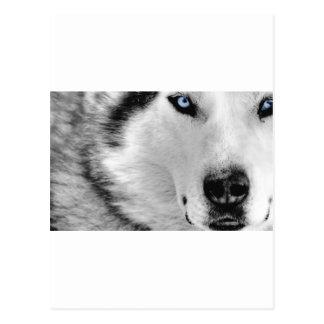 Huskey Postcard