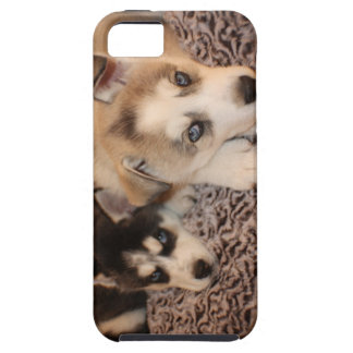 Huskey Puppy Case for Ipone 5