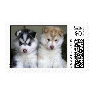huskie buds postage
