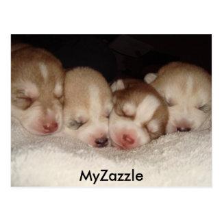 huskies2, MyZazzle Postcard