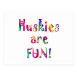 Huskies are Fun Postcard