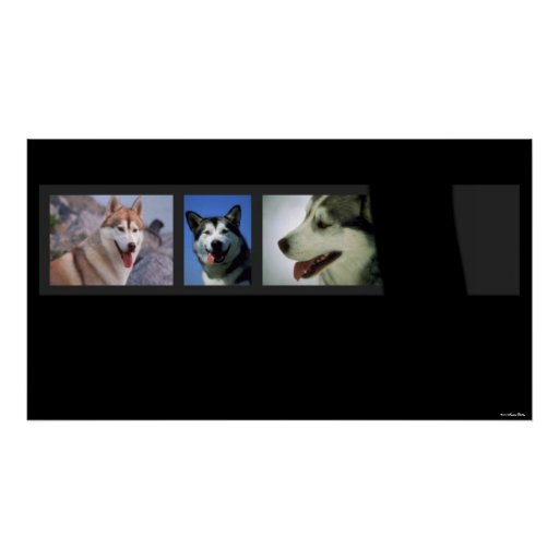 Huskies Print