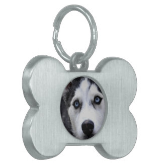 husky-54 placas de mascota
