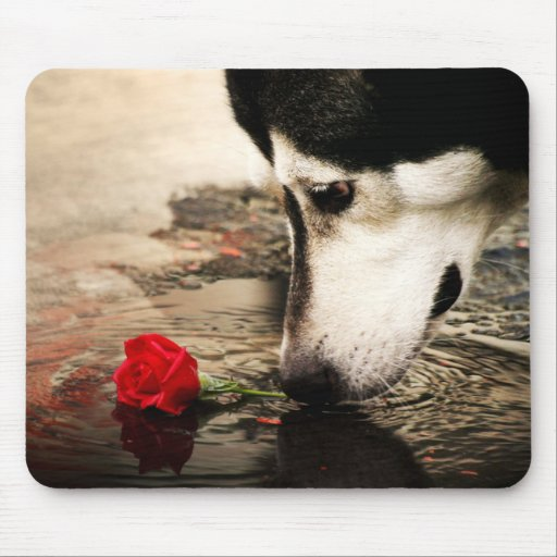 Husky and Red Rose Photography Mousepad