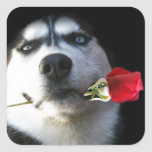 Husky and Rose Valentine/Tango Dog Stickers