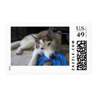 husky and the frisbee postage