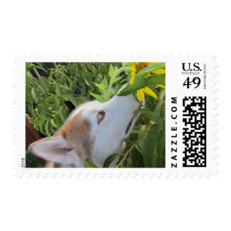 husky and the sunflower postage