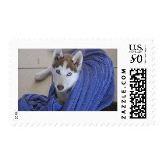 husky and the towle postage