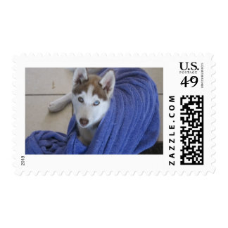 husky and the towle stamps
