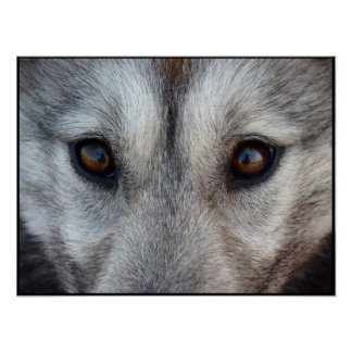 Husky Art Print Sled Dog Art Poster Wolf Pup Gifts