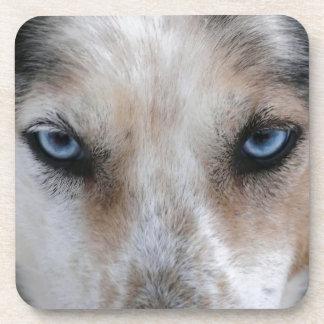 Husky blue eyes coaster