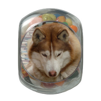 Husky Jelly Belly Candy Jars