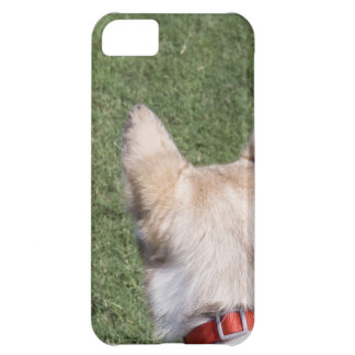 Husky iPhone 5C Cover