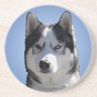 Husky Coaster Husky Malamute Sled Dog Coaster