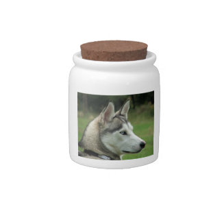 Husky dog beautiful photo portrait, gift candy dishes
