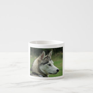 Husky dog beautiful photo portrait, gift espresso cup
