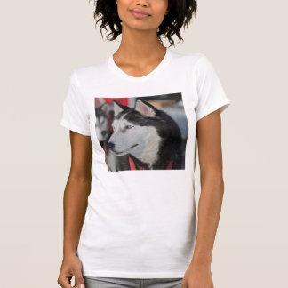 Husky dog before a race, Canada T-Shirt