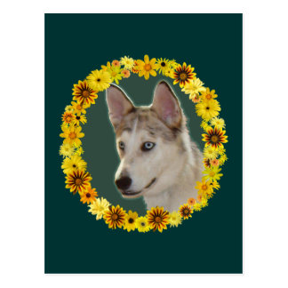 Husky Dog Circle of Flowers Postcard