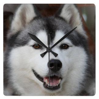 Husky Dog  Clock