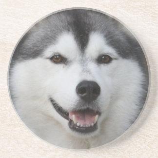Husky Dog Coasters