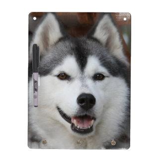 Husky Dog  Dry Erase Board