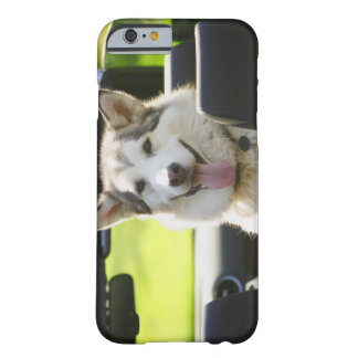 Husky dog from convertible barely there iPhone 6 case