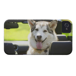 Husky dog from convertible iPhone 4 cover