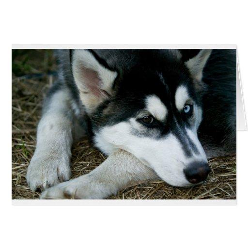 Husky Dog Greeting Card