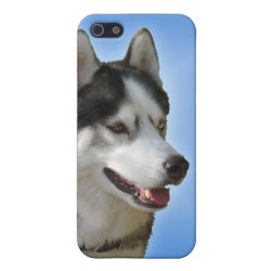 Case Savvy iPhone 5 Matte Finish Case with Siberian Husky Phone Cases design